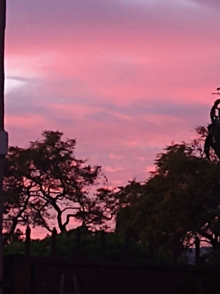 vibrant pink sunset with tree silhouettes